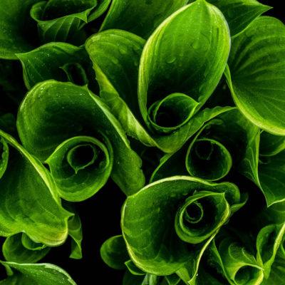plantes-remedes-naturopathie