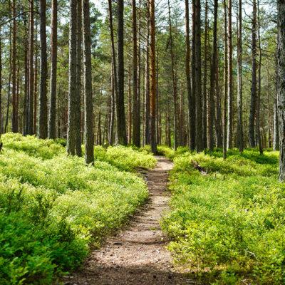 recherche-sens-naturopathie